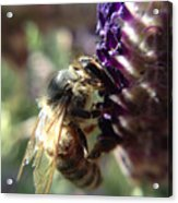 Bee Mine Acrylic Print