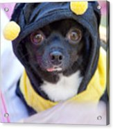 Chihuahua Says Bee Mine Acrylic Print