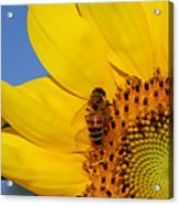 Bee My Sunshine Acrylic Print