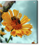 Bee Nice Acrylic Print