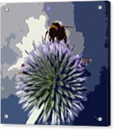 Bee On An Allium Acrylic Print