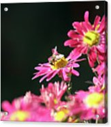 Bee On Flower Spring Scene Acrylic Print