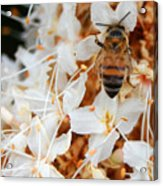 Bee On Flowers 2 Acrylic Print