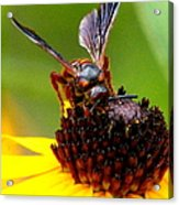 Bee On Lazy Susan 3 Acrylic Print