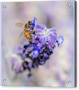 Bee On Sage Acrylic Print