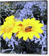 Bee On The Yellow Acrylic Print