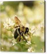 Bee On Top Of Things Acrylic Print