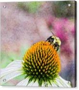 Bee On Yellow Coneflower Acrylic Print