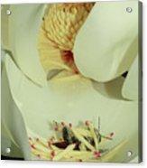 Bee Pollen Overdose Acrylic Print