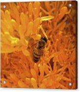 Bee Positive Acrylic Print