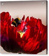 Bee Right Back With Red Flower Acrylic Print
