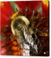 Bee Six - Acrylic Print