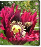 Bee-utiful Acrylic Print