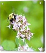 Bee Wings Acrylic Print