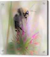Bee2 Acrylic Print