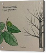 Beech Tree Id Acrylic Print