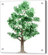 Beech Tree Minimalist Watercolor Painting Acrylic Print