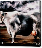 Beef Holocaust Iv Acrylic Print