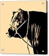 Beef Poster Acrylic Print