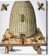 Beehive, 1658 Acrylic Print