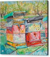 Beehives In Orchard Acrylic Print
