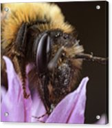 Bee's Eye Acrylic Print