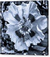 Double Bees On Poppy Bw Acrylic Print