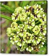 Bees Pollinating Acrylic Print