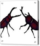 Beetle And Stag Beetle Acrylic Print