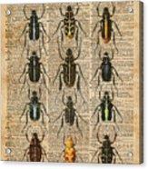 Beetles Bugs Zoology Illustration Vintage Dictionary Art Acrylic Print
