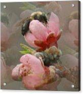 Beeware-2 Acrylic Print