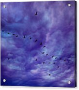 Before It Storms Acrylic Print