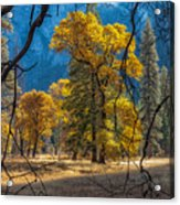 Behind The Branches Acrylic Print