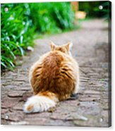 Behind The Cat Acrylic Print