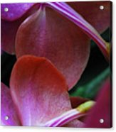Behind The Orchids Acrylic Print