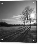 Behind The Trees Acrylic Print