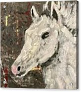Behold A White Horse Acrylic Print