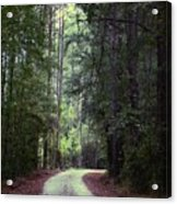 Beidler Forest Acrylic Print