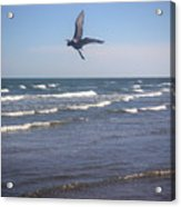 Being One With The Gulf - On Wings Acrylic Print