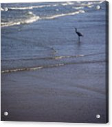 Being One With The Gulf - Watching Acrylic Print