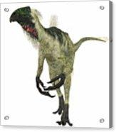 Beipiaosaurus Dinosaur On White Acrylic Print