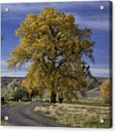 Belfry Fall Landscape 5 Acrylic Print