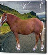 Belgian Horse Acrylic Print