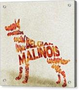 Belgian Malinois Watercolor Painting / Typographic Art Acrylic Print