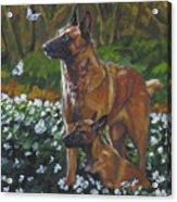 Belgian Malinois With Pup Acrylic Print