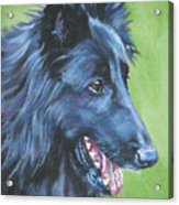 Belgian Sheepdog Acrylic Print