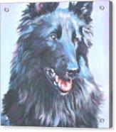 Belgian Sheepdog Portrait Acrylic Print
