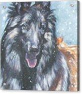 Belgian Tervuren In Snow Acrylic Print