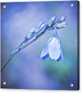 Bell Flower Acrylic Print