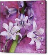Bell Flowers Acrylic Print